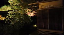 2020-yoru-koyo-chionin5.jpg