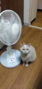 210522 扇風機が