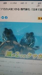 210703 亀の頭