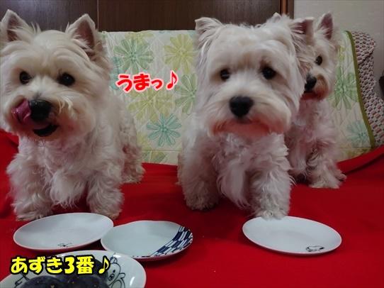 azukiaiharu10.jpg