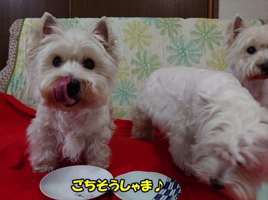azukiaiharu11.jpg