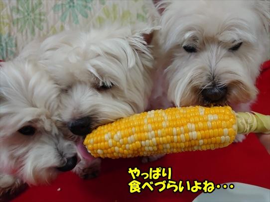 azukiaiharu2_2021062318365322c.jpg