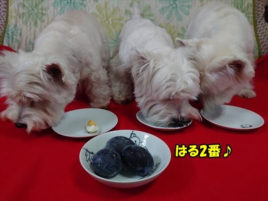 azukiaiharu9.jpg
