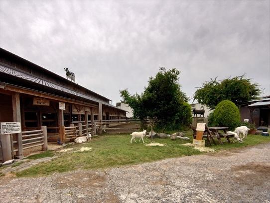 farm6.jpg