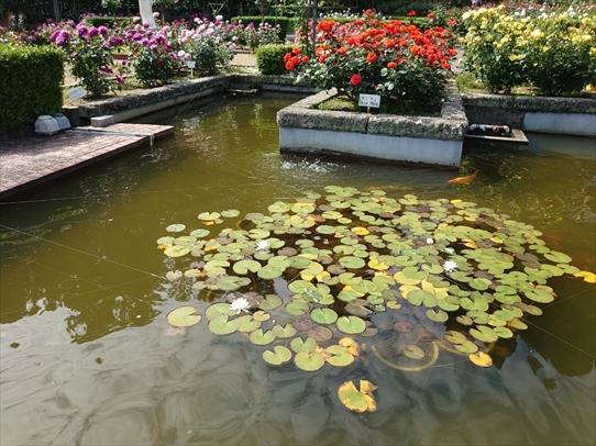 rosepark11_2021052816131872c.jpg