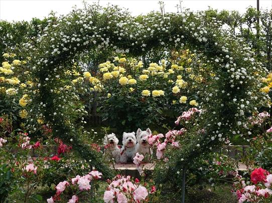 rosepark16_202105281631541b3.jpg