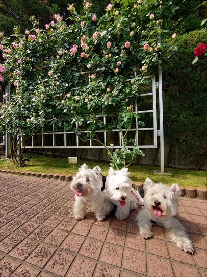 rosepark19_202105281722280f4.jpg