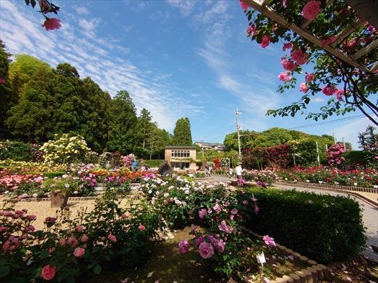 rosepark1_20210528155020111.jpg