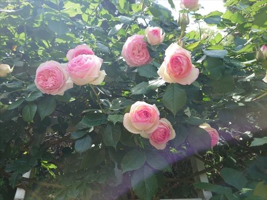 rosepark20_202105281722286f3.jpg