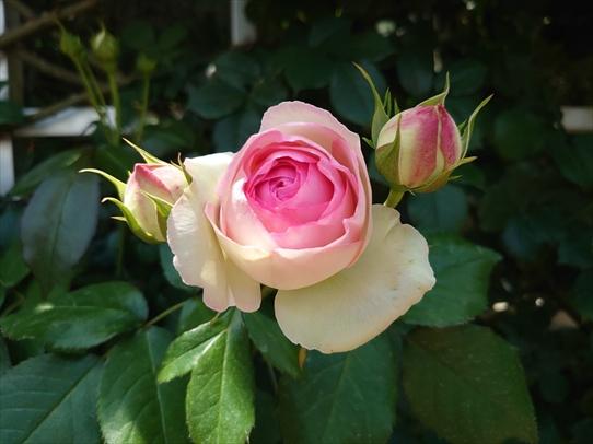 rosepark21_20210528172227dbd.jpg