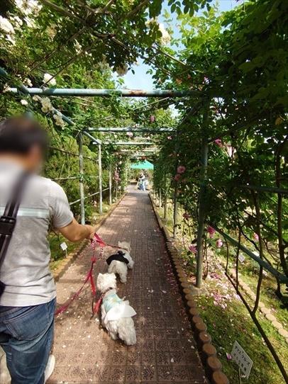 rosepark22_20210528172226c50.jpg