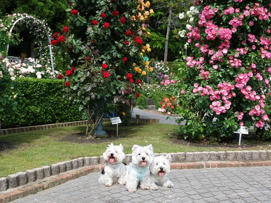 rosepark23_20210528172225089.jpg