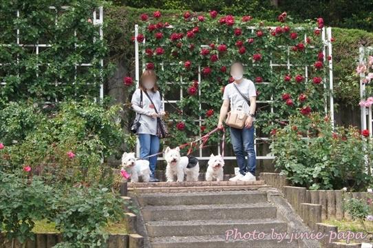 rosepark24_20210528173856f87.jpg