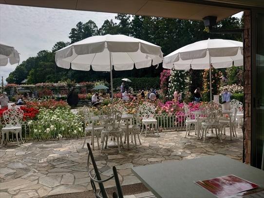 rosepark30_202106011547455de.jpg