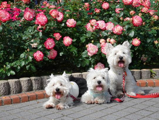 rosepark3_20210528155019f8e.jpg