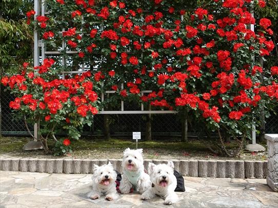 rosepark7_20210528161321f5f.jpg