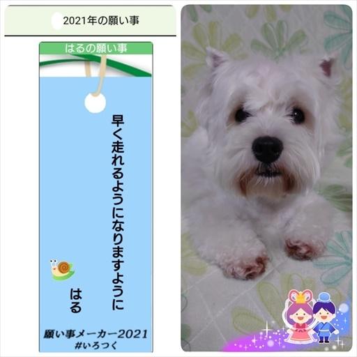 tanabatasama2.jpg