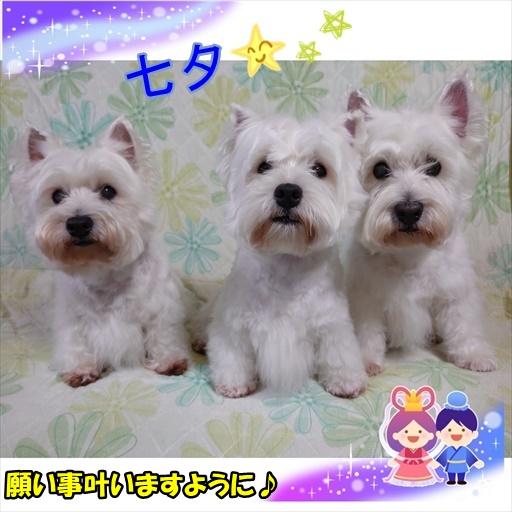 tanabatasama3.jpg
