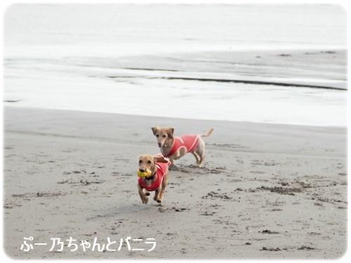 ぷー乃ちゃんとバニラ