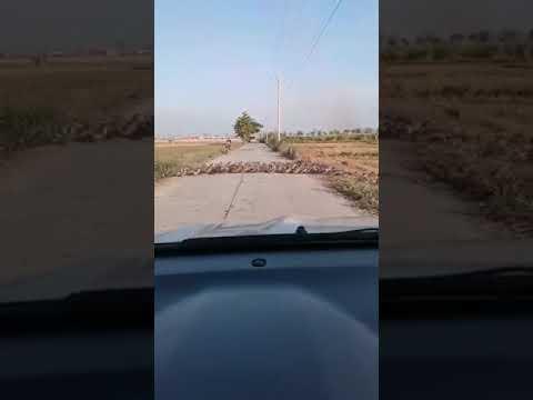 カモが道路を横断する様子が日本とちょっと違う・・・