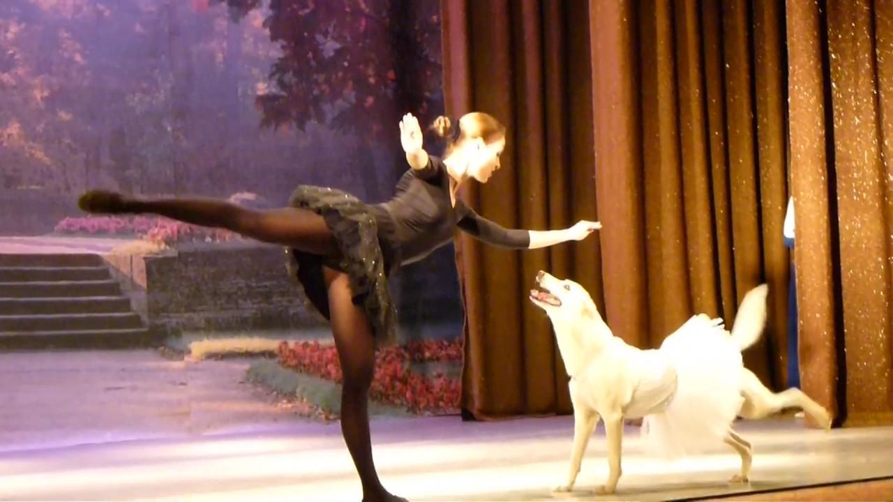 人一緒にバレエを踊るイヌが癒やされる!!