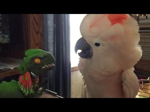 恐竜とインコの戦い_01