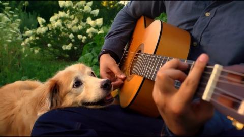 ギターにうっとりのワンちゃん_01