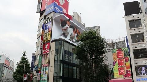 超巨大なネコ_01