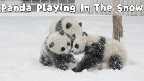 雪の中で遊ぶパンダこ子供_01