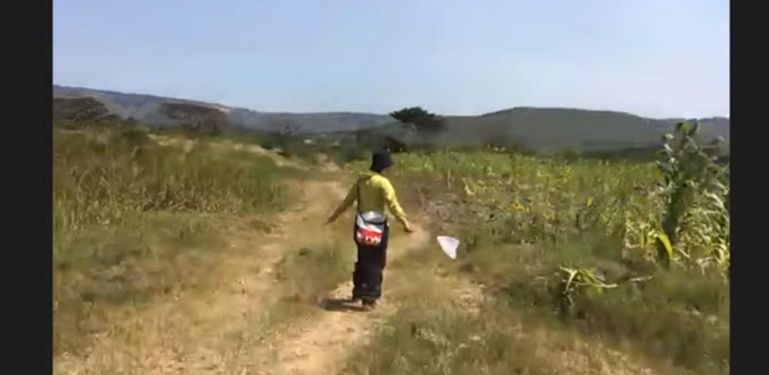 ルワンダのはるちゃん虫10