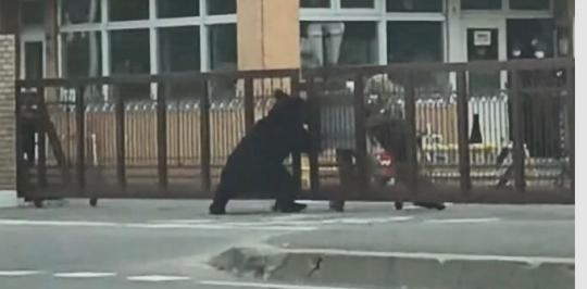 【札幌】自衛隊基地に熊が侵入、自衛隊員を襲い猟友会が射殺