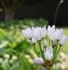 令和3年5月のお庭の花