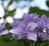 令和3年6月のお花