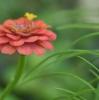 令和3年7月のお花