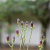 令和3年8月お庭の花