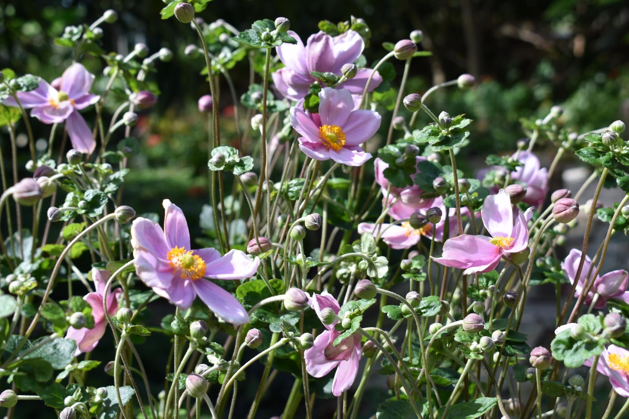 令和3年9月の花