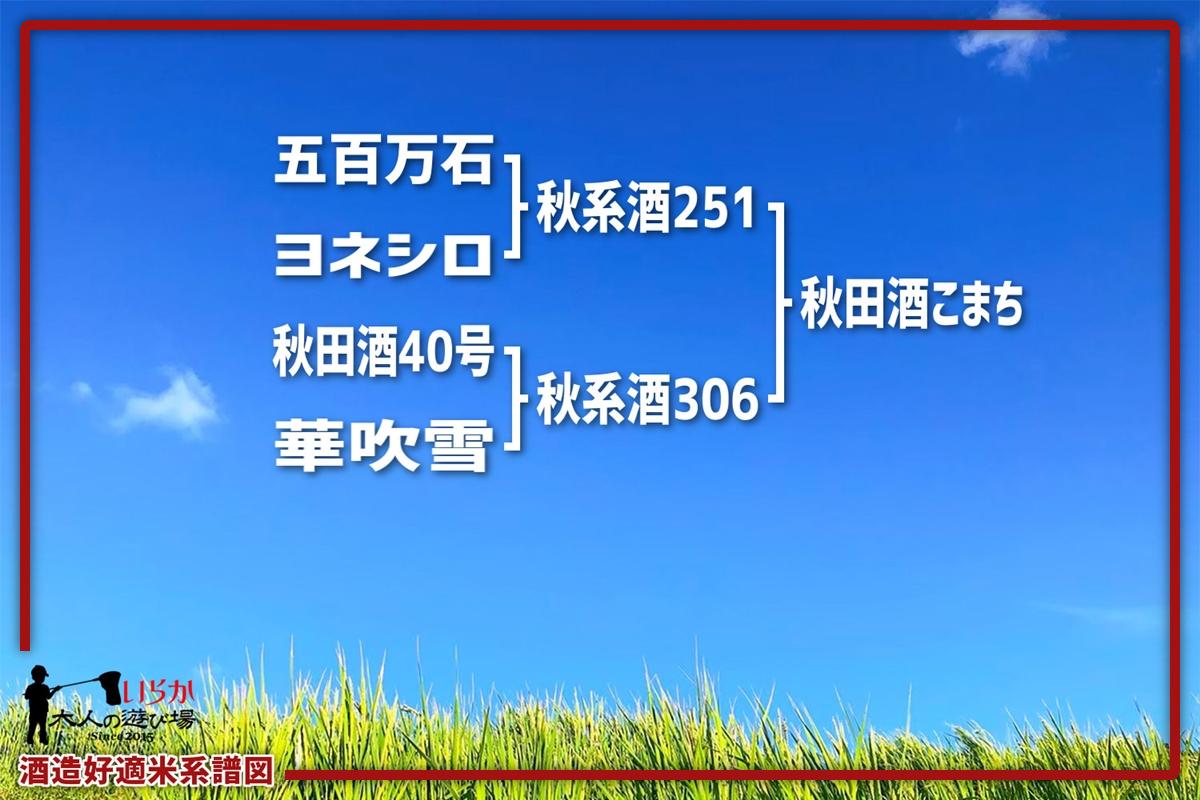 秋田酒こまち202106-1