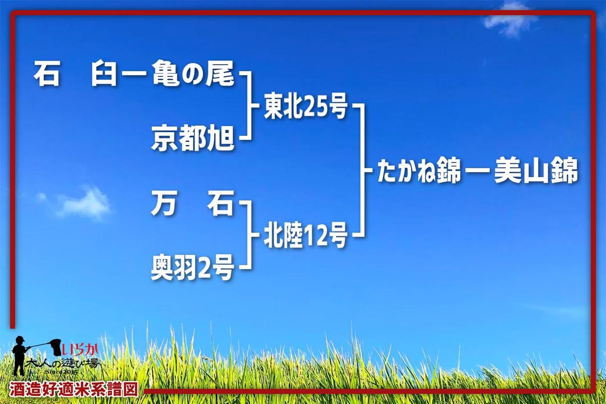 美山錦202106-1