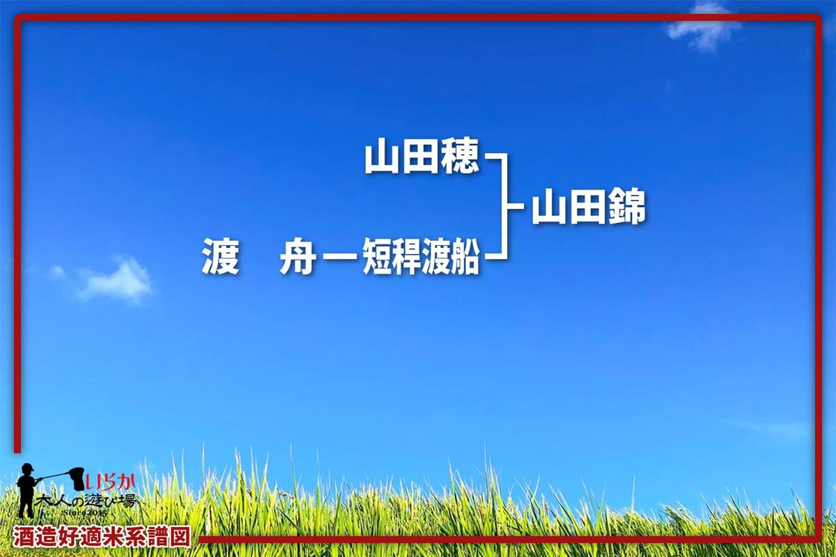 山田錦202106-1