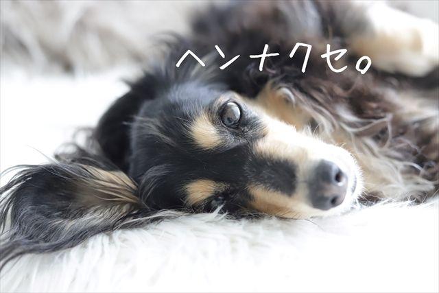 愛犬にヘンなクセはありますか?