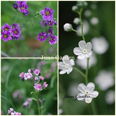 小さな花達210508