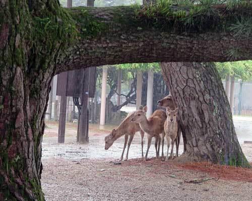 210520鹿
