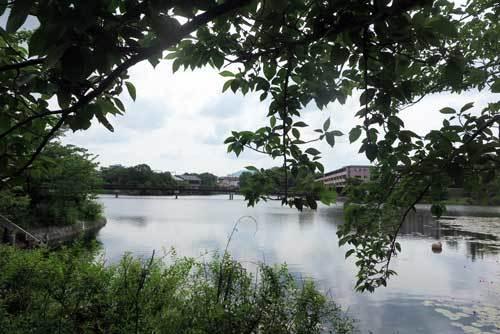 210602菖蒲上池
