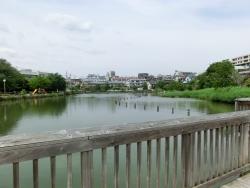 小池公園 上池台散策2