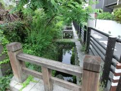 洗足流れ散策 上池台散策2