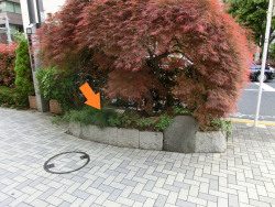 東京都第一建設事務所が作った「越前堀の間知石」1 新川散策5