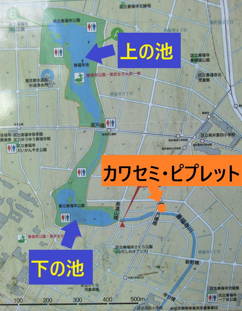 地図 カワセミ・ピプレット記事