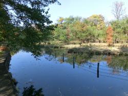 下の池 景観 カワセミピプレット記事