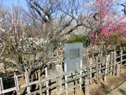 羽木公園 太宰府天満宮から寄贈された「飛梅」の分身 代田・代沢散策2