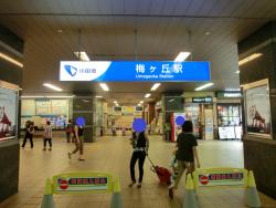 梅ヶ丘駅 代田・代沢散策2